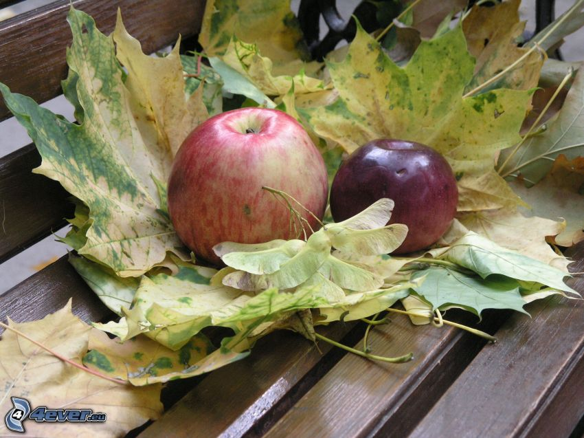 red apples, autumn leaves
