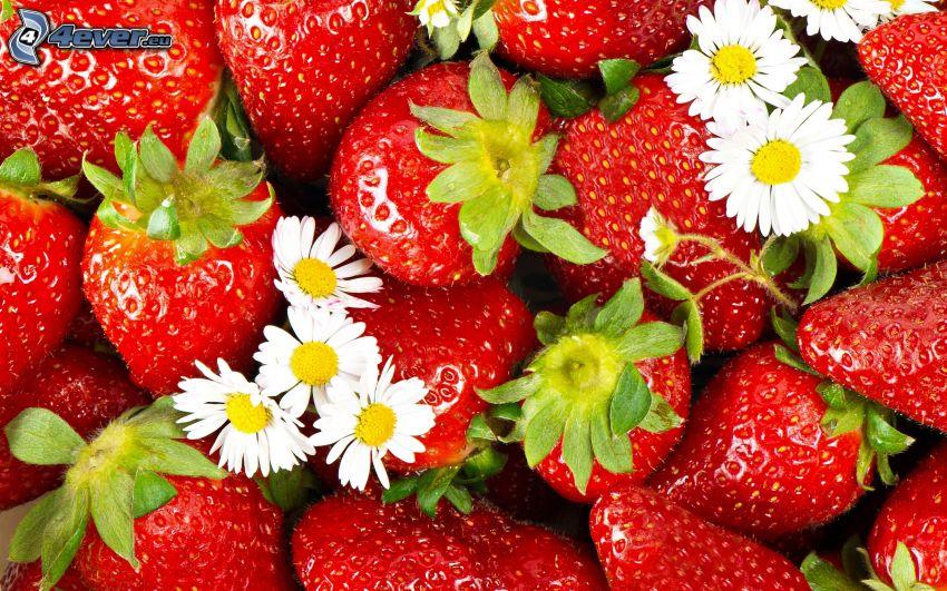 strawberries, daisies