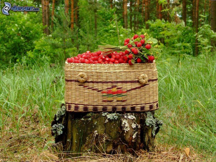 wild strawberries, basket, stump