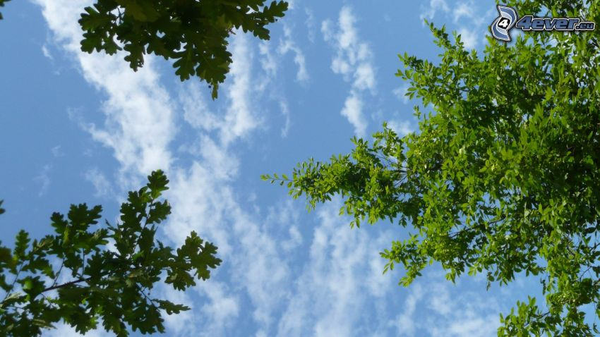 green trees, clouds