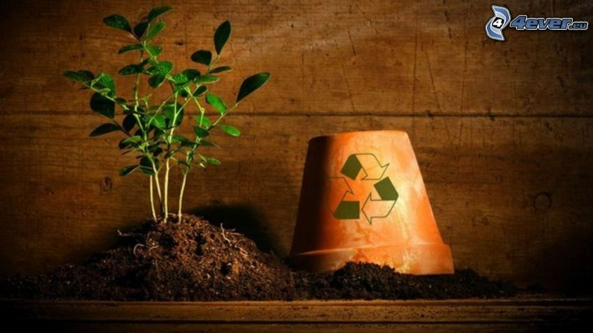 herb, flowerpot, clay