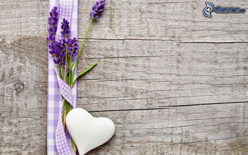 lavender, heart, wooden wall