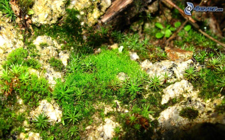 moss, greenery
