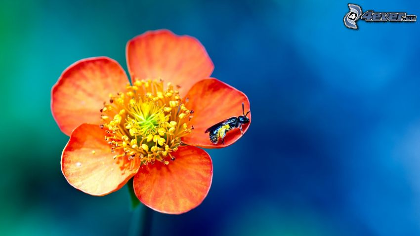 orange flower, fly