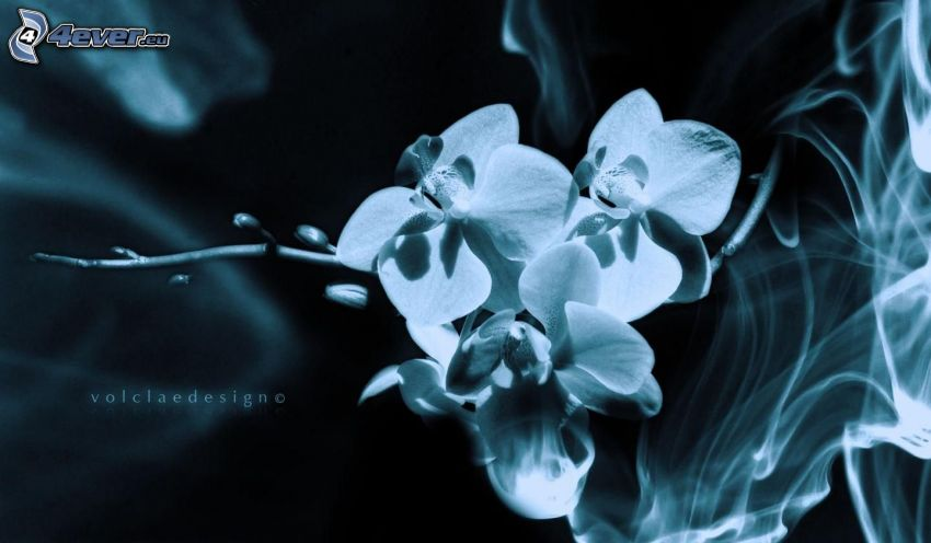 Orchid, smoke, black and white