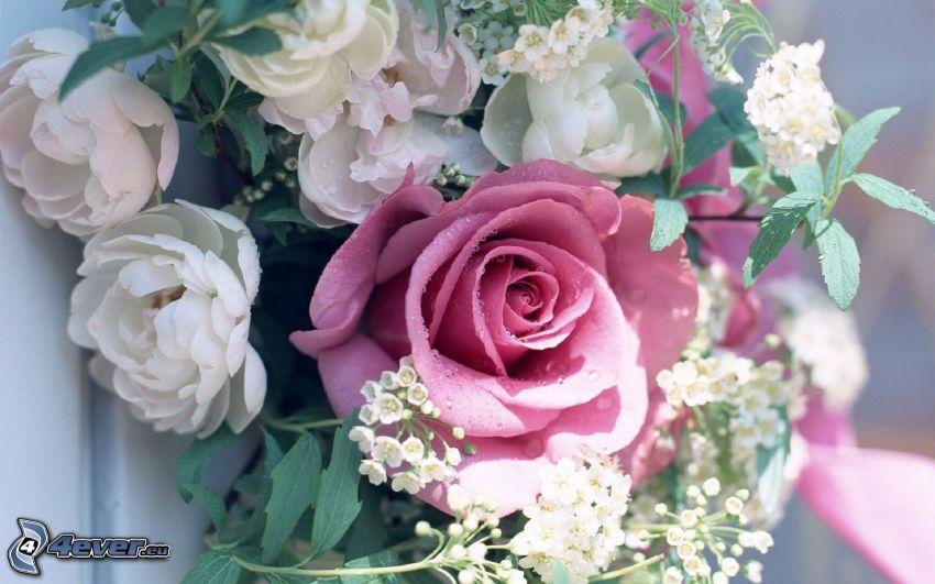 pink rose, flowers