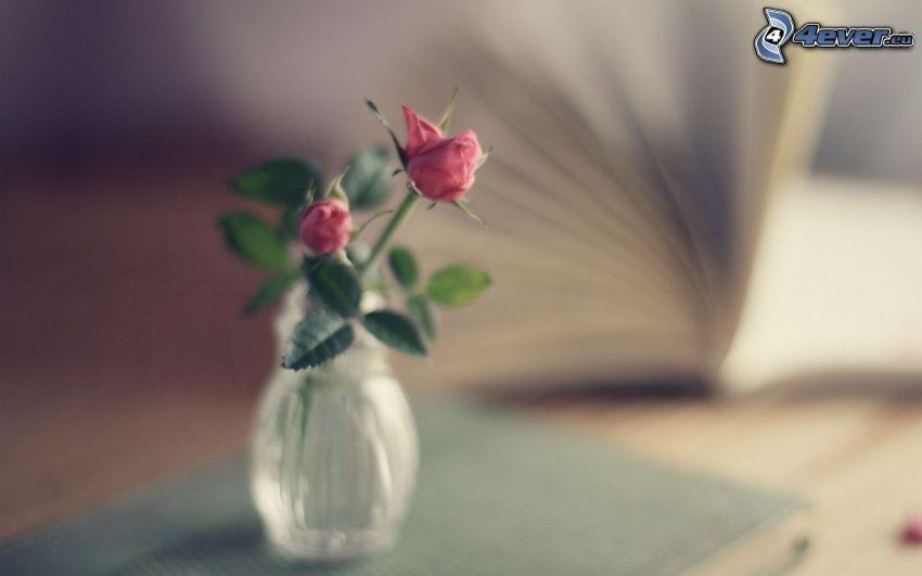 pink roses, vase