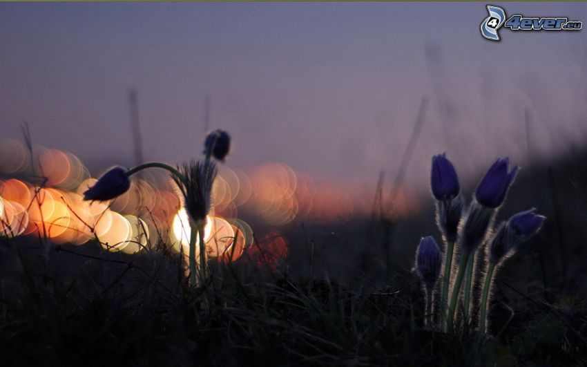 plant, lights