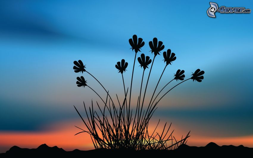 plants, silhouette, after sunset