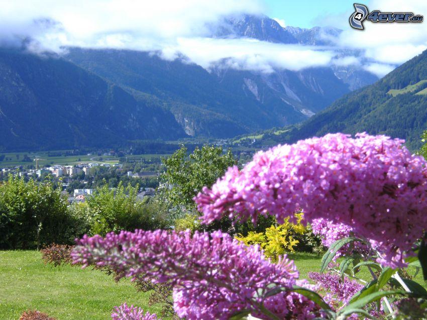 purple flowers, city, mountains, Austria, clouds