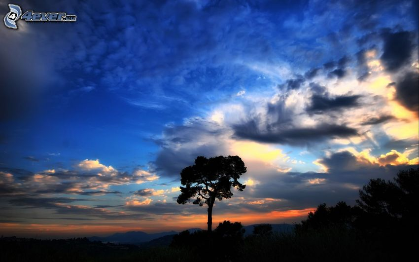 silhouette of tree, clouds