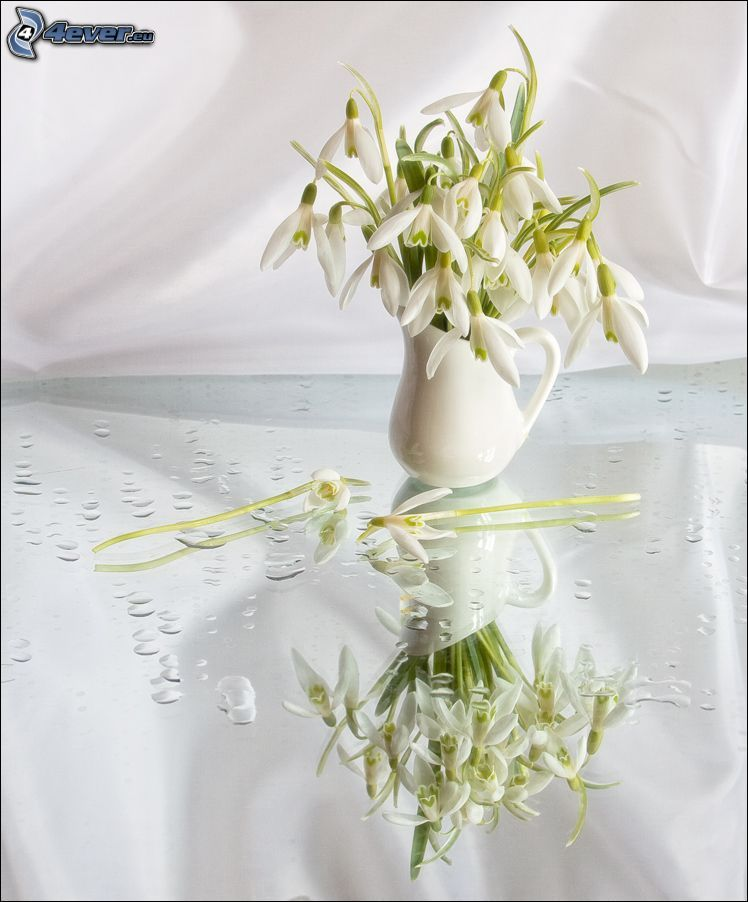 snowdrops, vase, drops of water, reflection