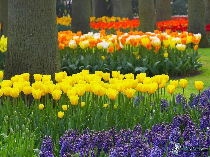 tulips, flowers, trees