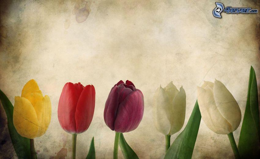 tulips, paper