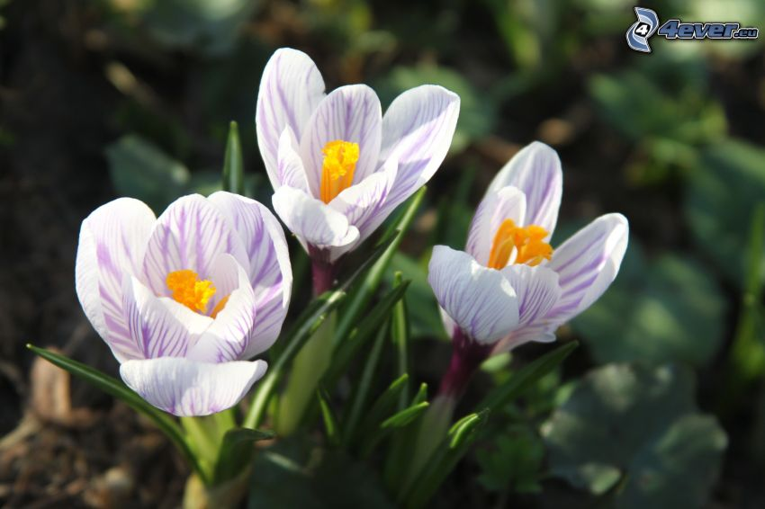 white flowers