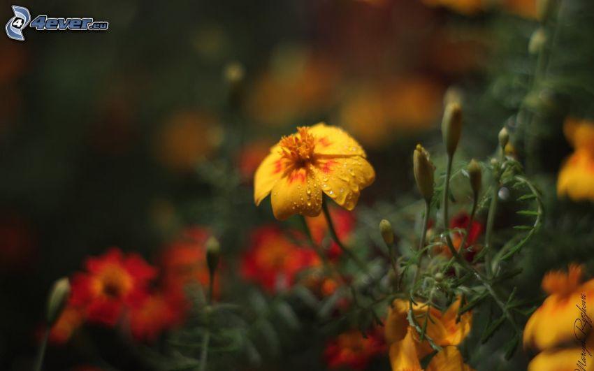 yellow flowers, greenery