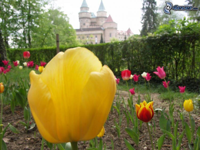 yellow tulip, castle Bojnice, flowers