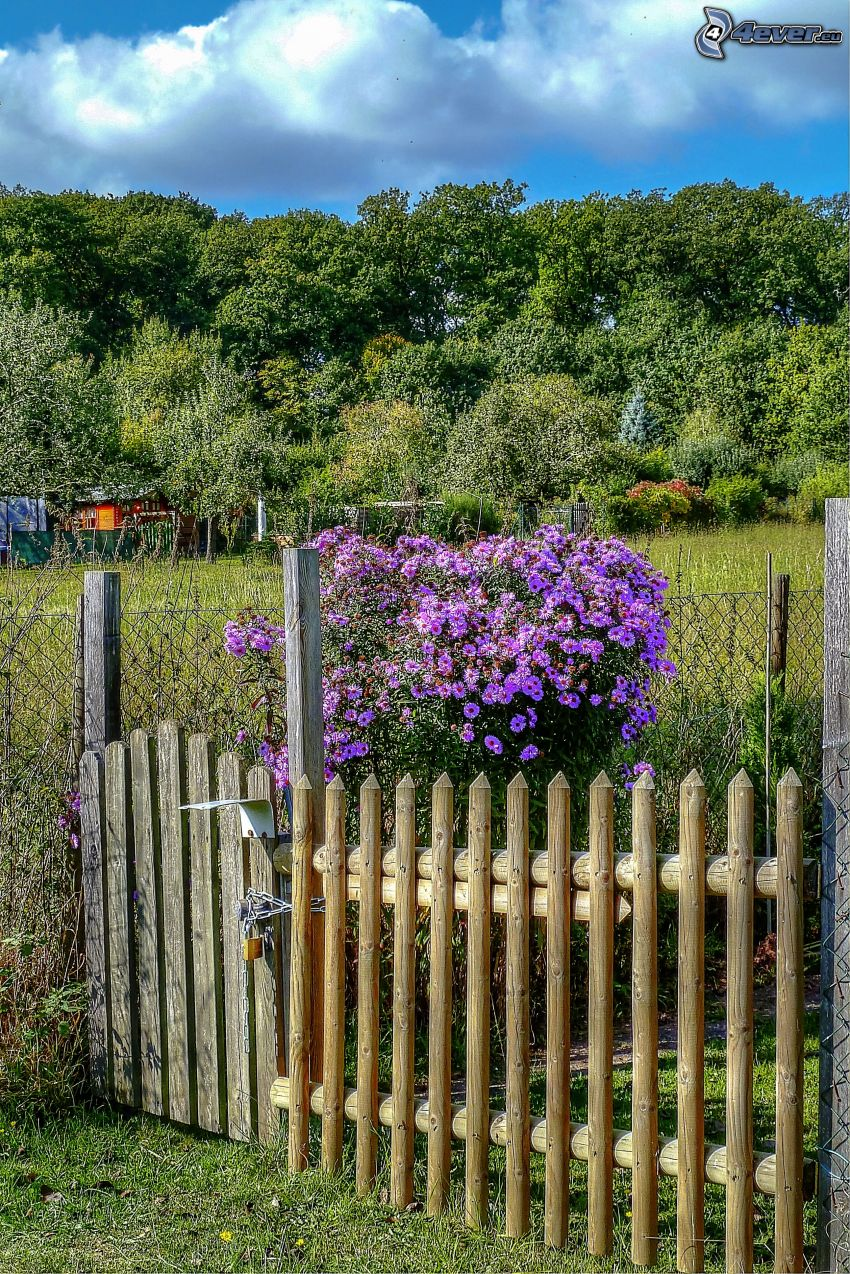 purple flowers, bush, palings, garden, trees