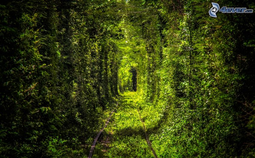 rails, green tunnel, green trees