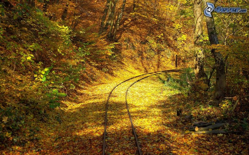 rails, yellow autumn forest, fallen leaves