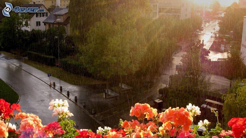 rain, geranium, street