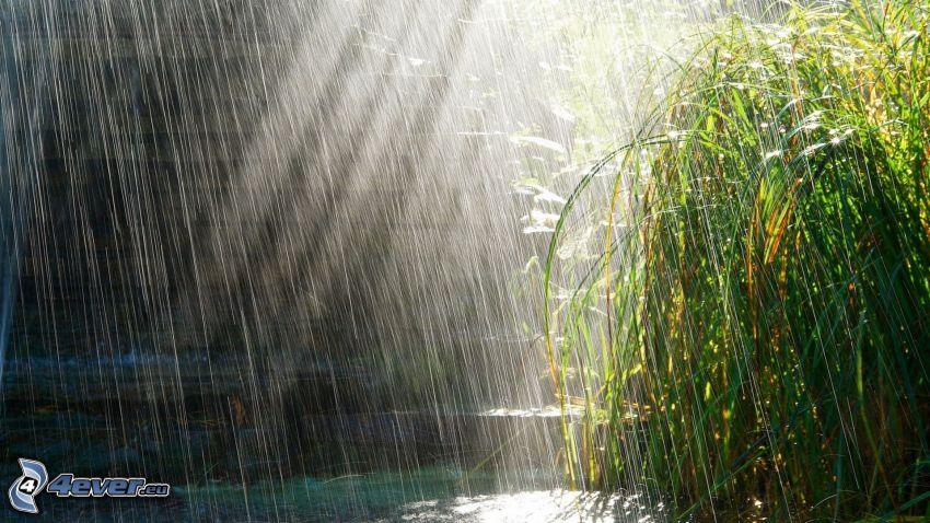 rain, plants