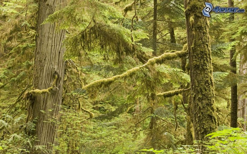 rainforest, trees, moss