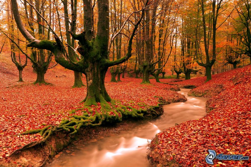 red autumn woods, trees, red leaves, stream