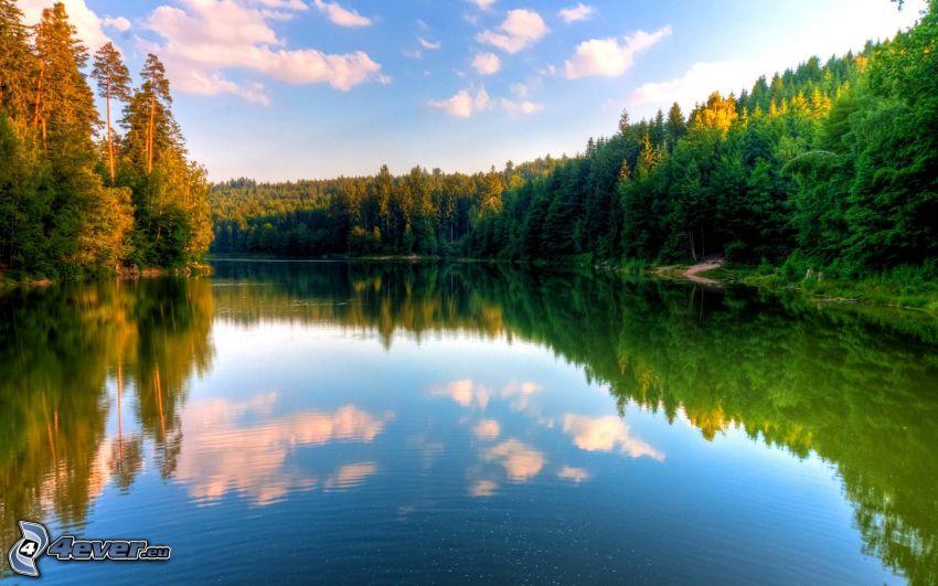 River, coniferous forest