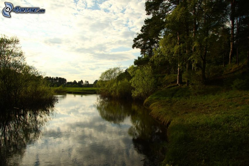 River, forest, greenery, clouds