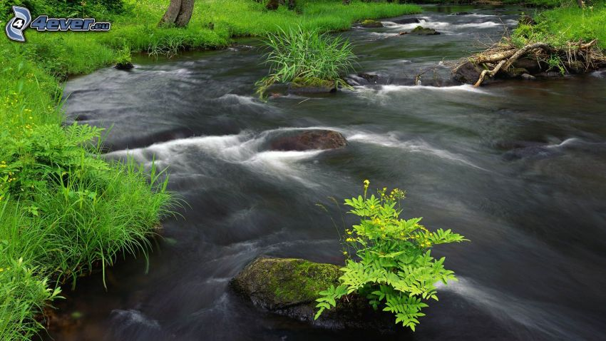 River, forest, greenery