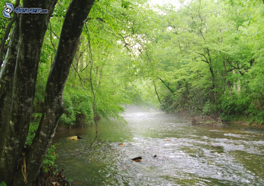 river in woods, green trees