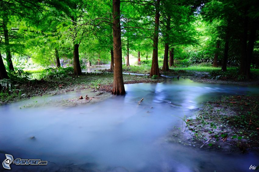 river in woods, greenery