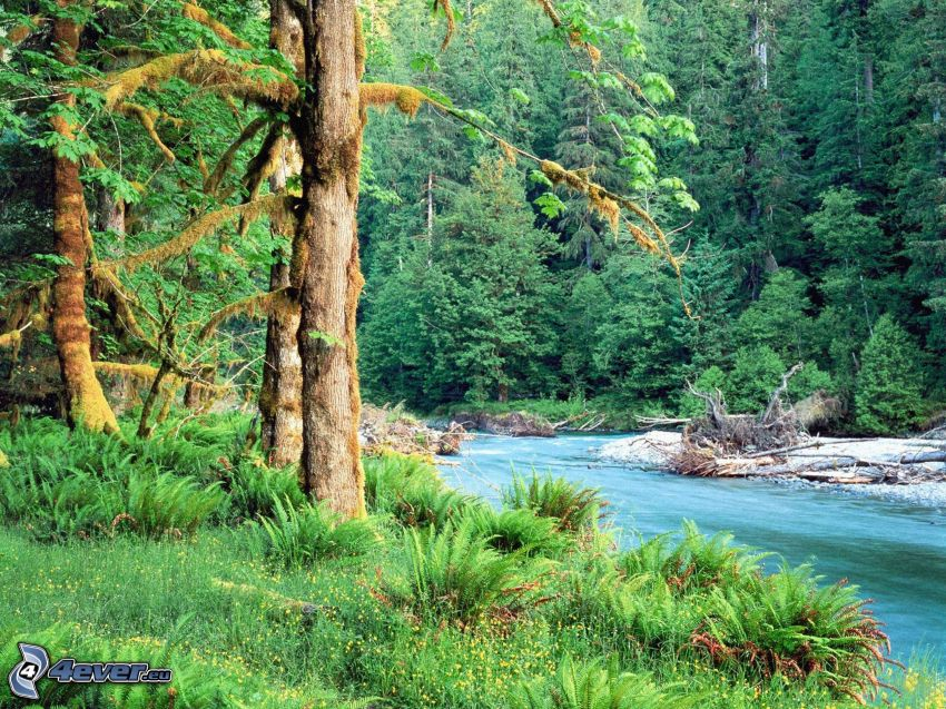 river in woods, trees, greenery