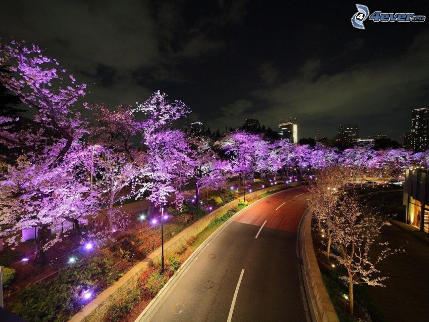 road curve, road, purple trees