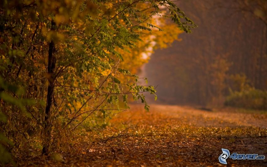 road through forest, autumn forest