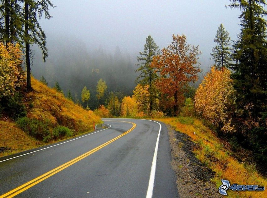 road through forest, road curve, autumn trees, fog