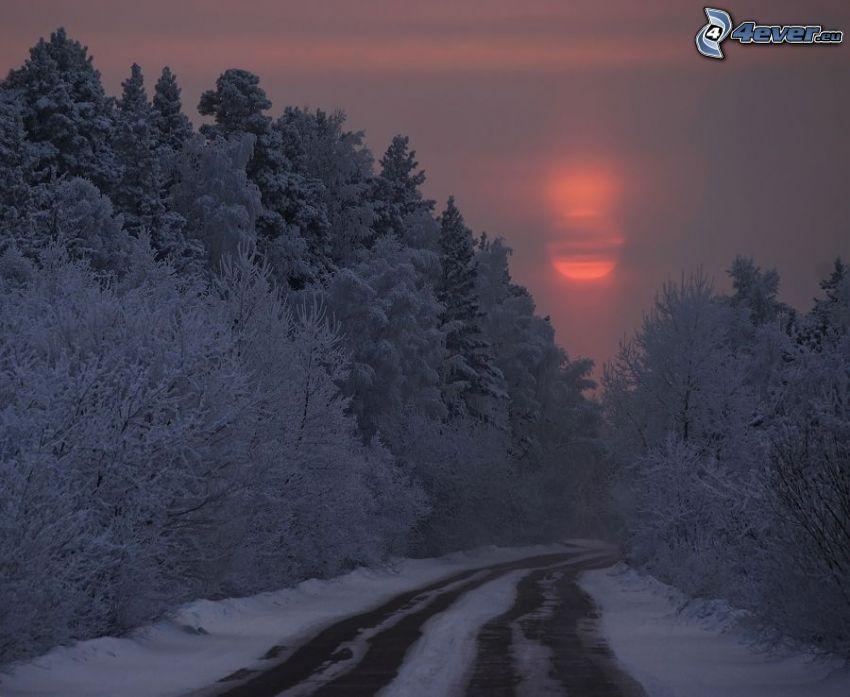 road through forest, snowy trees, weak sun