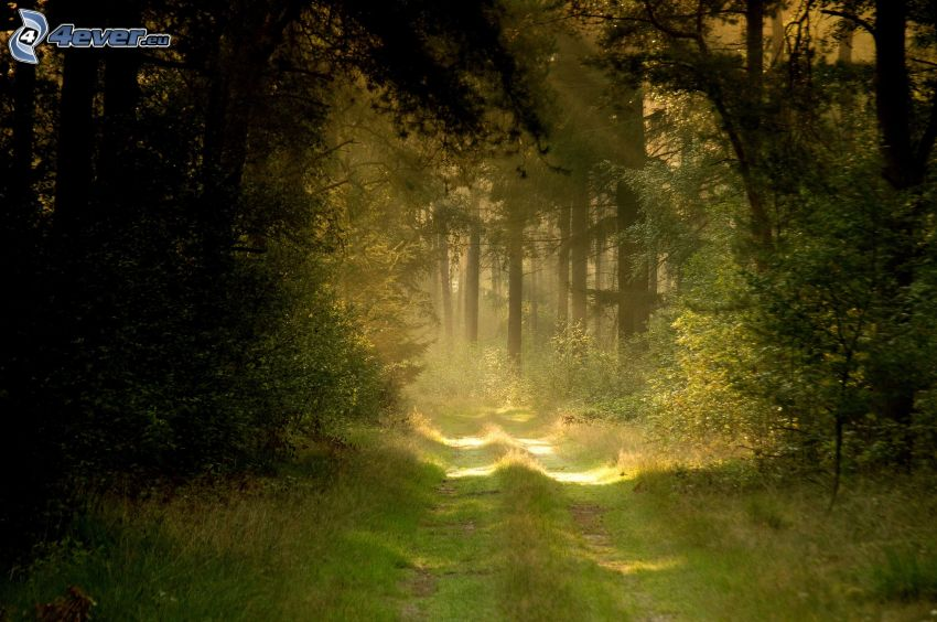 road through forest, sunbeams