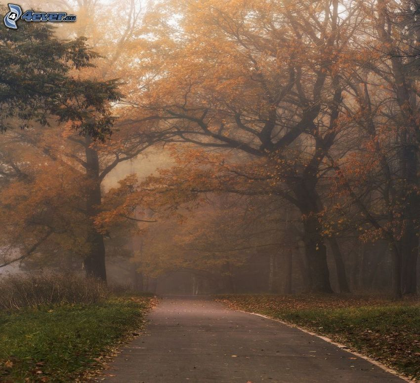 road through forest, yellow trees, fog in forest