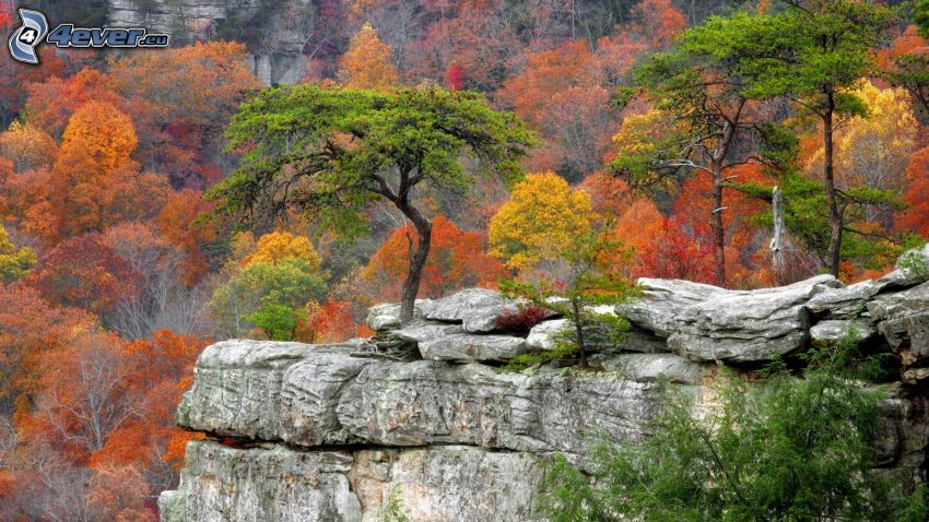 rock, colorful autumn trees