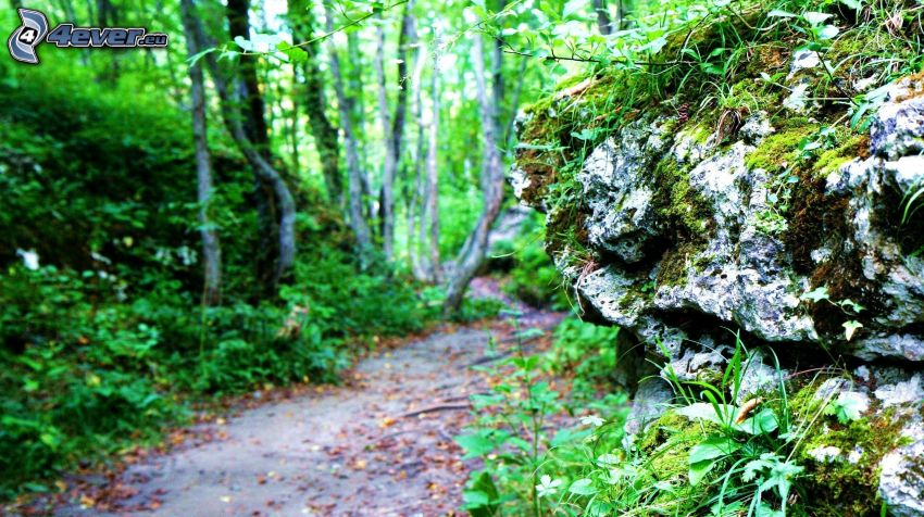 rock, greenery, forest path