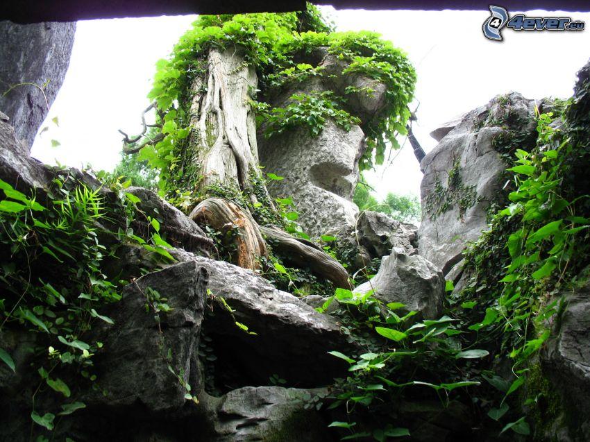 rock, greenery