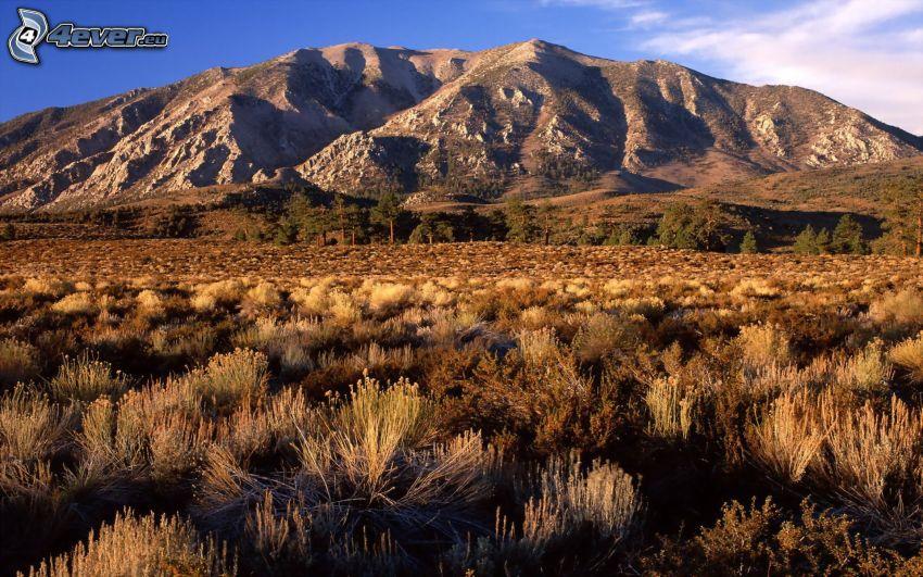 rocky hill, dry grass