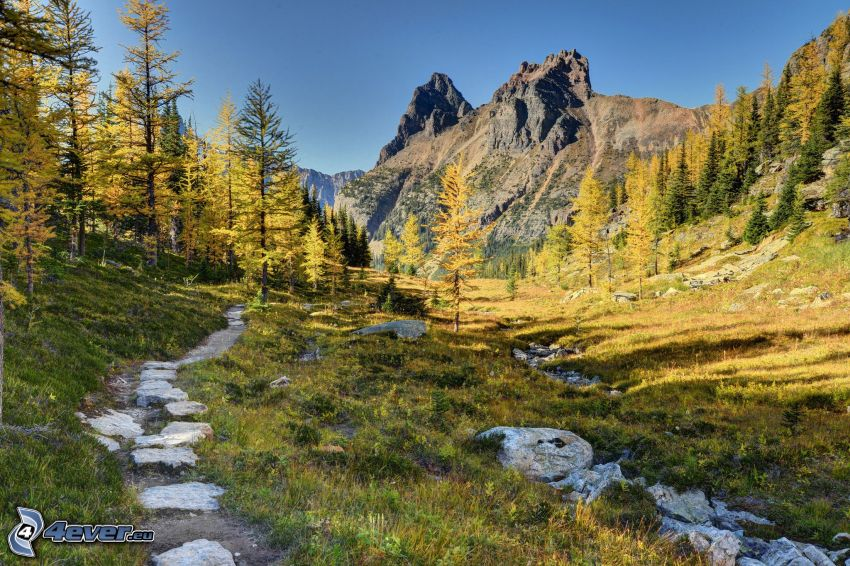 rocky mountains, valley, forest, forest path