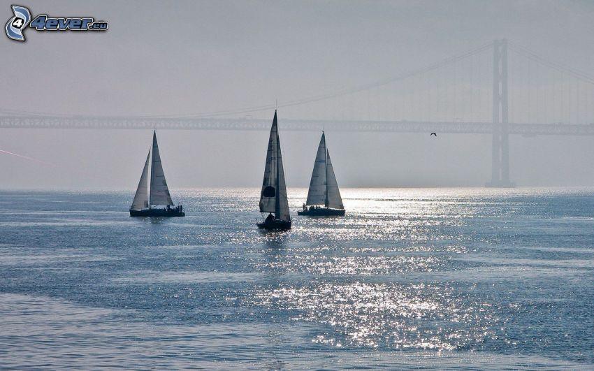 sailboats, bridge, Golden Gate