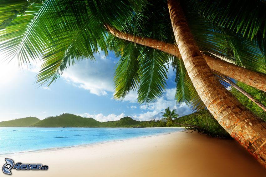 beach, palm trees over the sea, sea, mountain