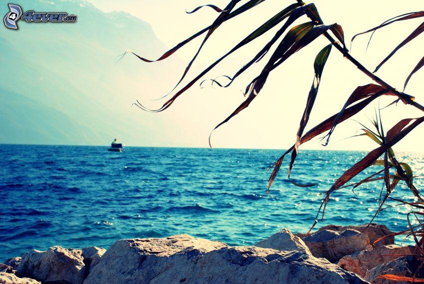 boat at sea, rocky coastline, dry leaves