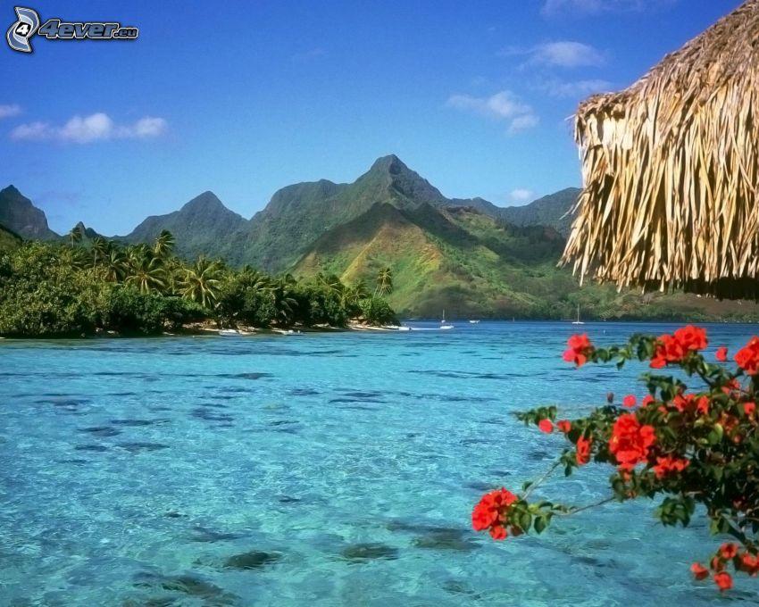 Bora Bora, mountains, red flowers, azure sea