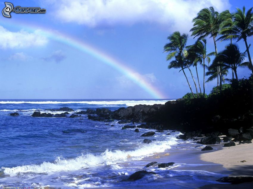 coast, palm trees, sea, rainbow